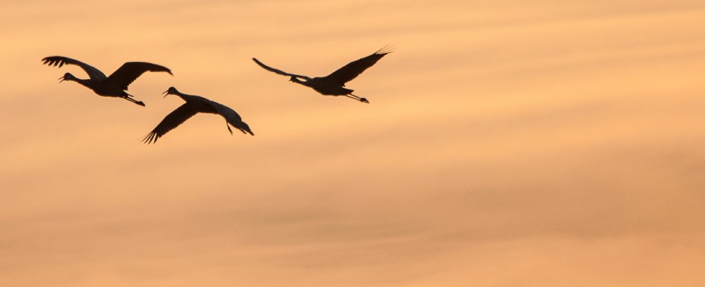 Birds flying through orange sunset